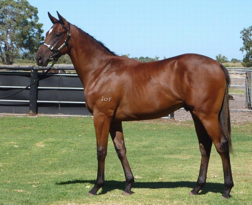 Lot 365 Colt So Secret Point of No Return