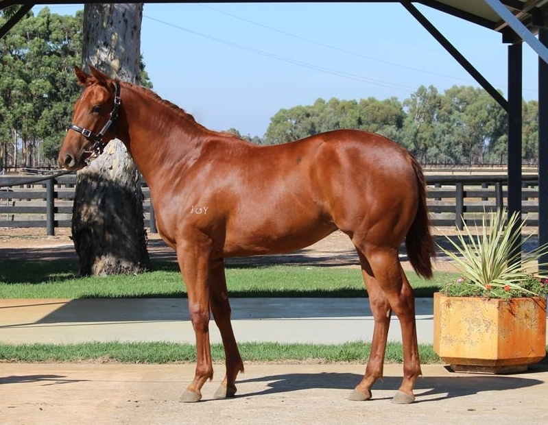 Lot 366 filly So Secret x New Cliche - dam sister to Listed winner GREAT NATION 11 wins