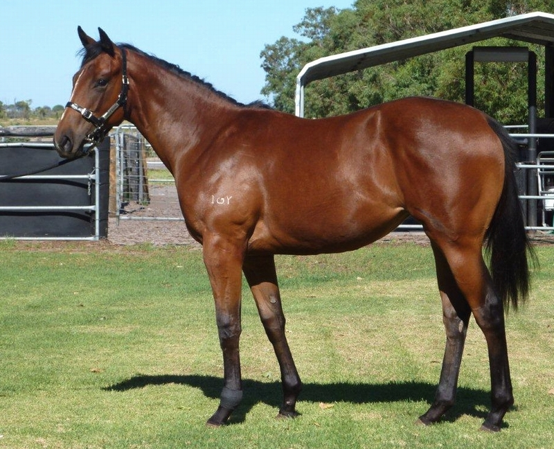 Lot 385 Filly So Secret Royal Minx