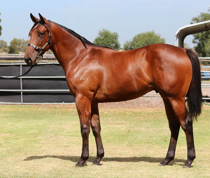 Lot 387 colt So Secret Startegic Choice