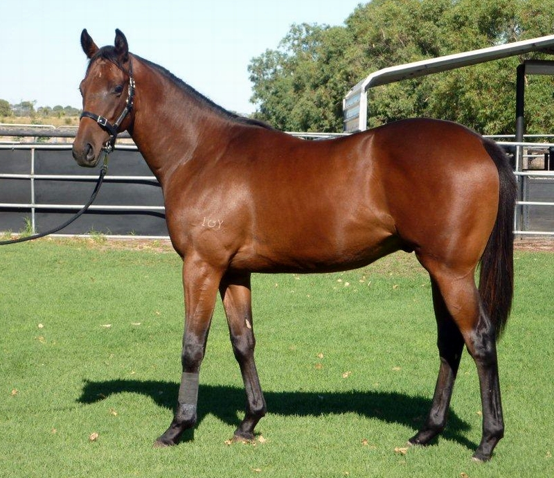 Lot 401 Colt  So Secret Sky Business