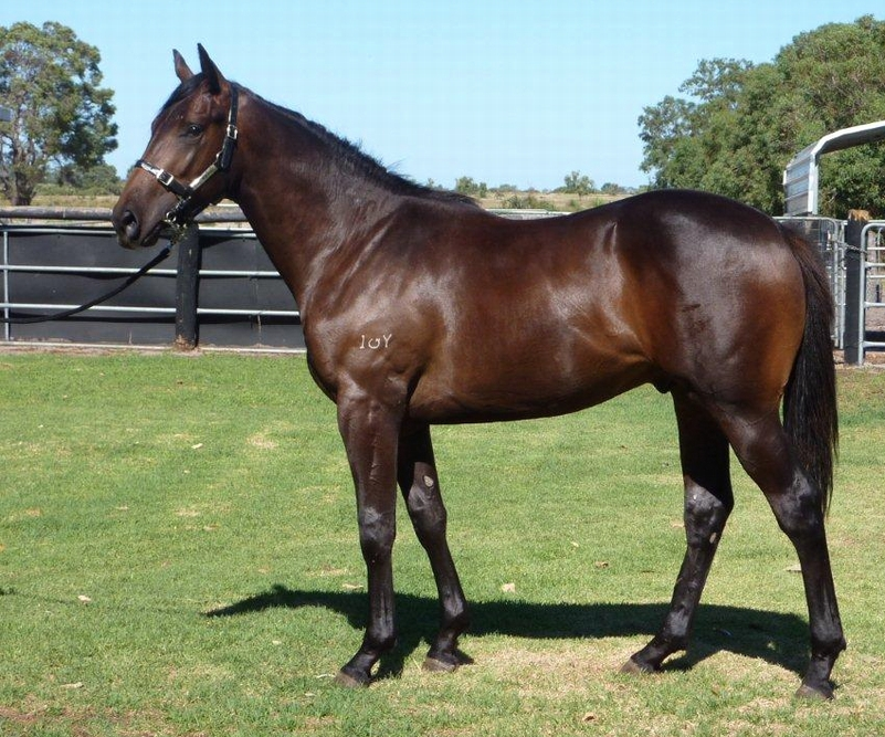 Lot 410 Colt So Secret Strategic Choice