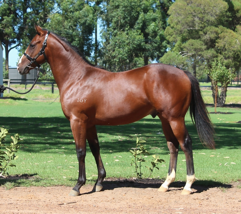 Lot 42 So Secret Marri Park Special colt