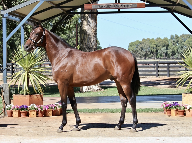 Lot 47 All American x Fictional colt