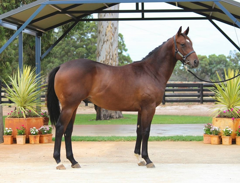 Lot 48 Galah x Conakey colt dam city winner of 6 and is half sister to G1 ORIGINAL LOVELOVER & G3 DANECAY