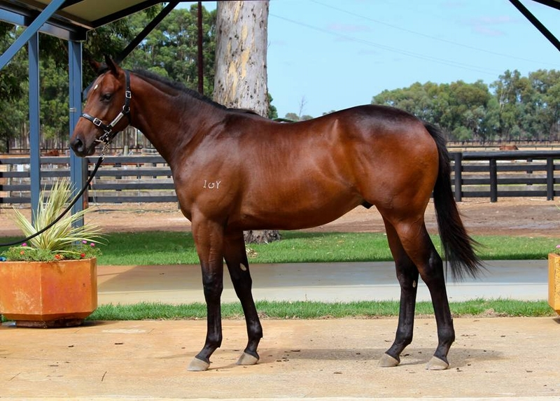 Lot 58 colt Galah x Secret Crush