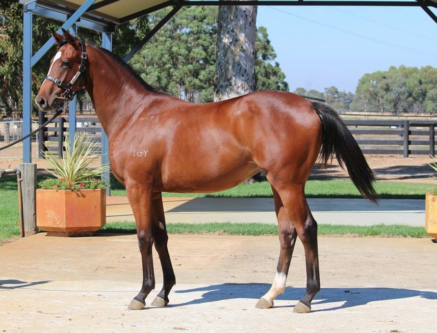 Lot 59 filly Galah x Secret Diva - First foal dam 2 wins and a half sister to G3 winner 16 races