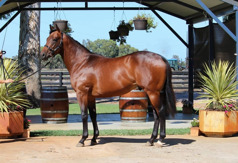 Lot 65 Galah x Fine Memories colt from a city winning mare and half brother to two city winners