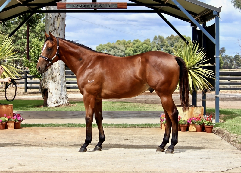 Lot 67 ASTERN out of MODERATION colt