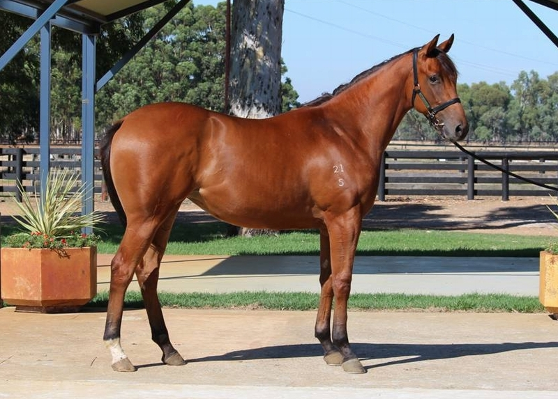 Lot 67 filly Galah x She's a Rich Girl - first living foal dam by Flying Spur and 3/4 sister to MOTSPUR 12w $646k