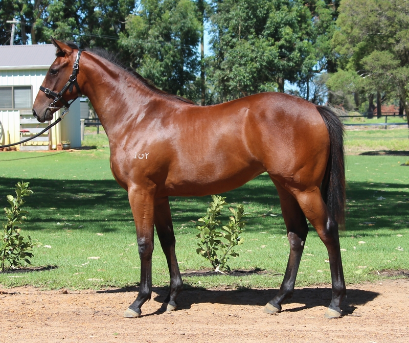 Lot 74 So Secret New Cliche filly