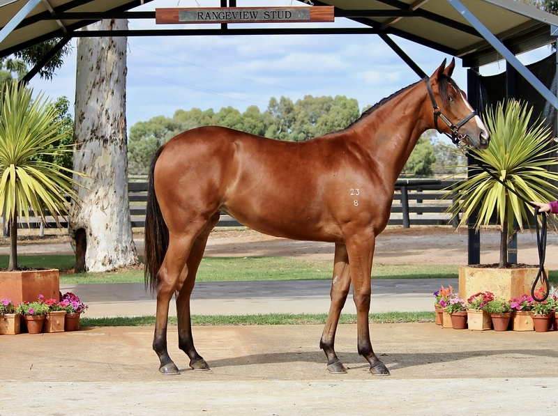Lot 90 VANCOUVER out of REAL HI Filly