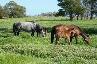 Mares on Clover!
