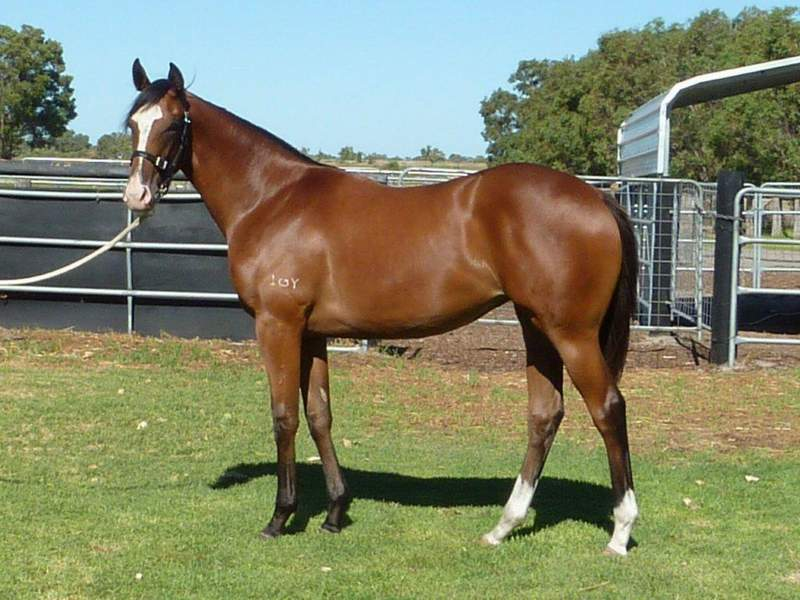 lot 104 Bay Filly Key Business-Outward Display