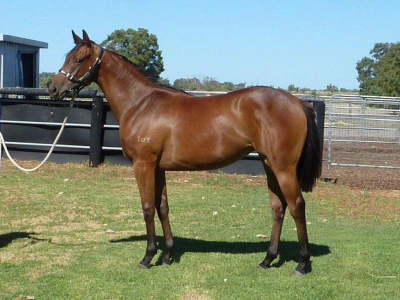 lot 119 Bay Filly Key Business-Point of No Return