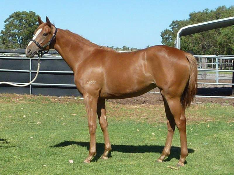 lot 129 Chestnut Filly Key Business-Prospect Sky