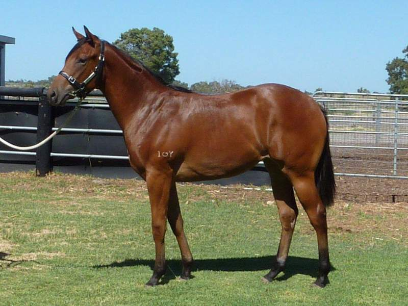 lot 166 Bay Filly Flying Pegasus-Scottish Storm