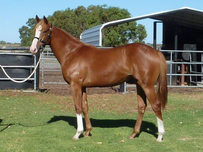 lot 209 Chestnut Filly Key Business-Strategic Choice
