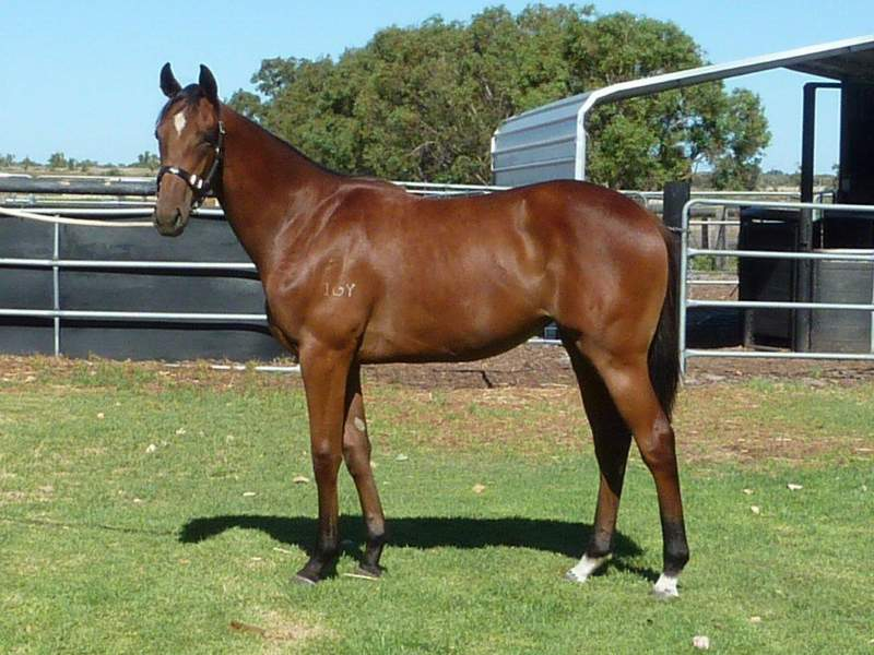 lot 348 Bay Filly Casino Prince-Cool Deal