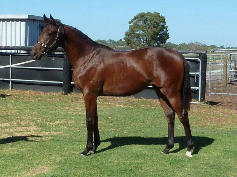 lot 441 Bay colt Elusive Quality-Interlagos