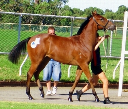 Anneke stepping out in time with Lot 166 Flying Pegasus Scottish Storm filly