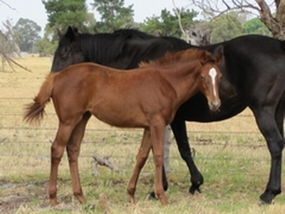 Conamore filly by So Secret
