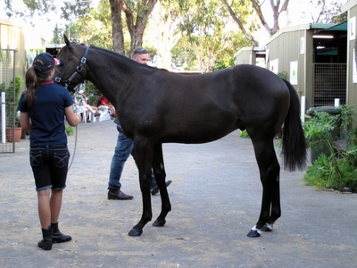 Count the inspections says Jess to Lot 227 Key Business Time Is Money colt