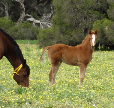 Ima Khan and her Henny Hughes foal