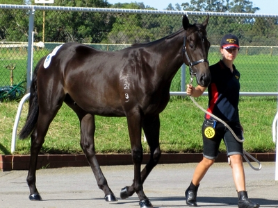 Jess and Lot 159 Key Business Saraab colt
