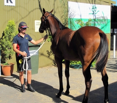 Jess showing off Lot 348 Casino Prince Cool Deal filly 2