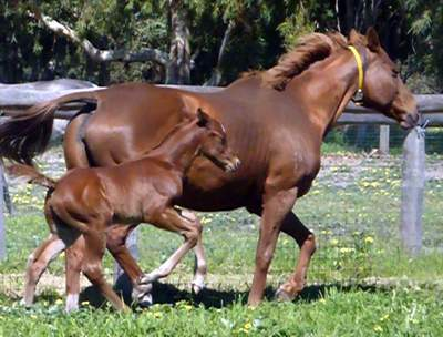 La Vie En Rose (Encosta DeLago) and colt