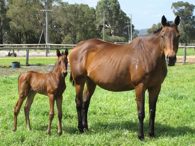 Miss Metallica and her So Secret filly