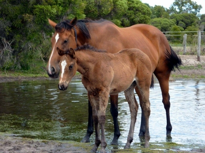 Real Hi Key Business Filly cooling off