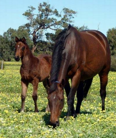 Rosey View with her  filly