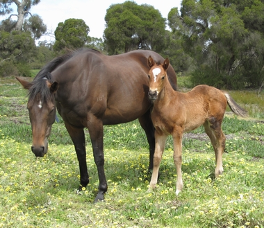 Serena Miss and her Alfred Noble filly