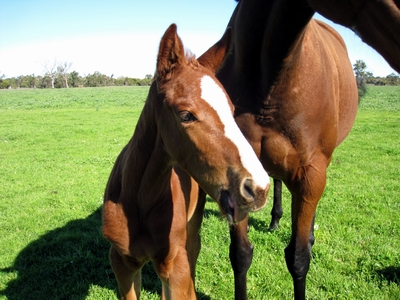 So Secret Lead Rope filly
