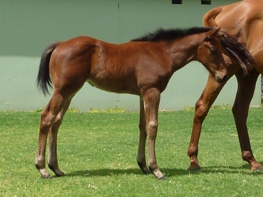 So Secret Strategic Choice colt