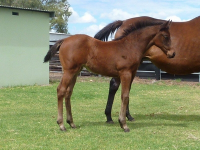 So Secret Western Mystique Filly for Lynn Graham