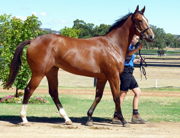Lot 226 Galah Hold The Money filly